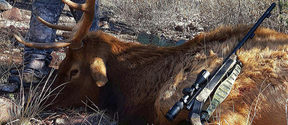 New Mexico Mobility Impaired Elk Hunts